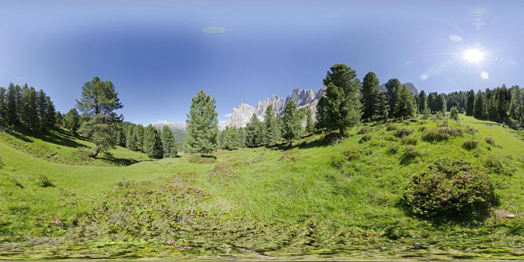 Geisler Gruppe Alpenrosen