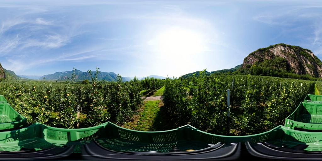 raccolta meli
