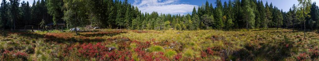 Peat bog at the baita Bait de la Busa