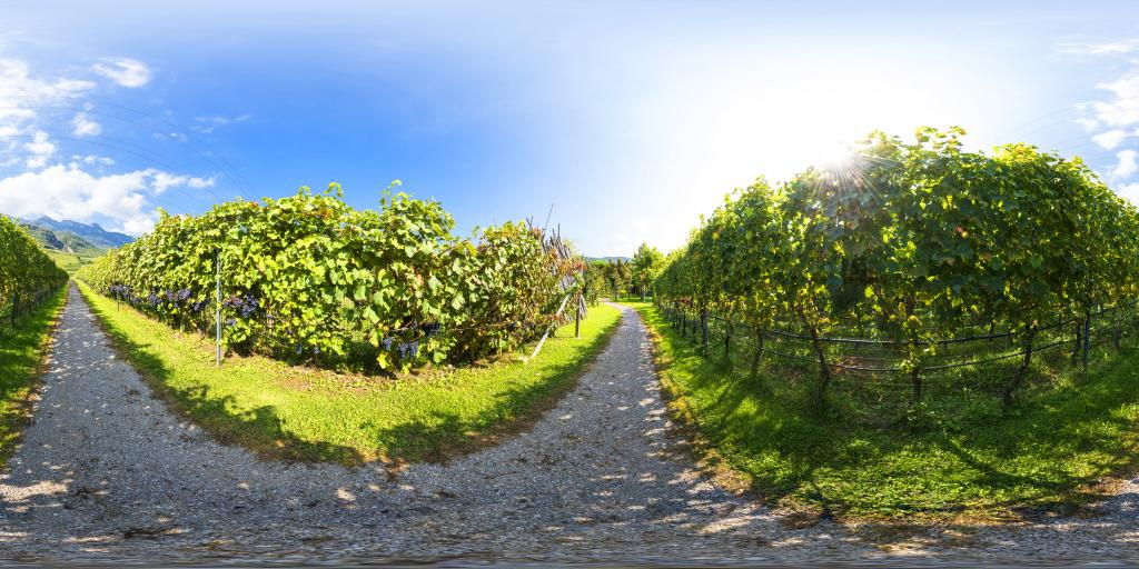 Private vineyard way to the lake Caldaro
